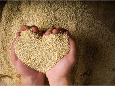 Le quinoa, c'est quoi ça ?
