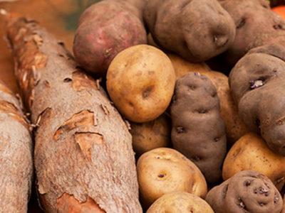 Taro, manioc, patate douce, igname, … : des tubercules aux 1000 vertus.
