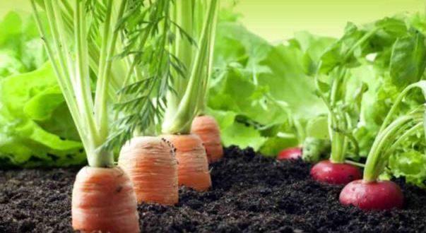 Des fruits et légumes que tu peux faire pousser chez toi !